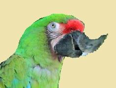 Mogelvogel