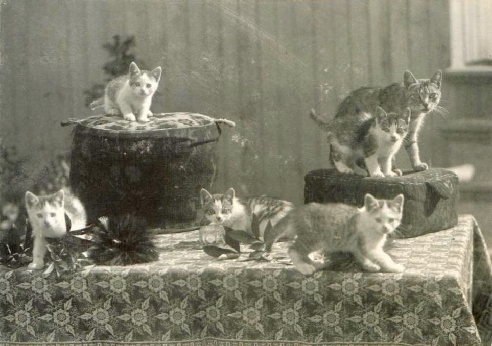 Katzen-trainieren-Microwellenreiten